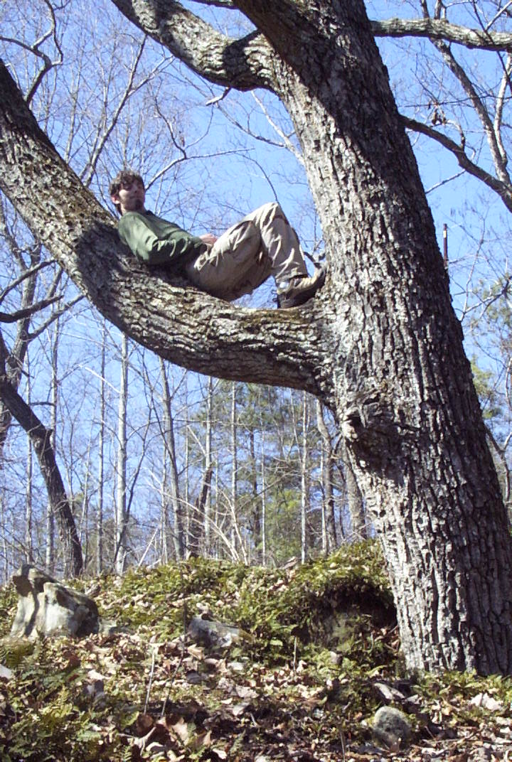 Person in Tree